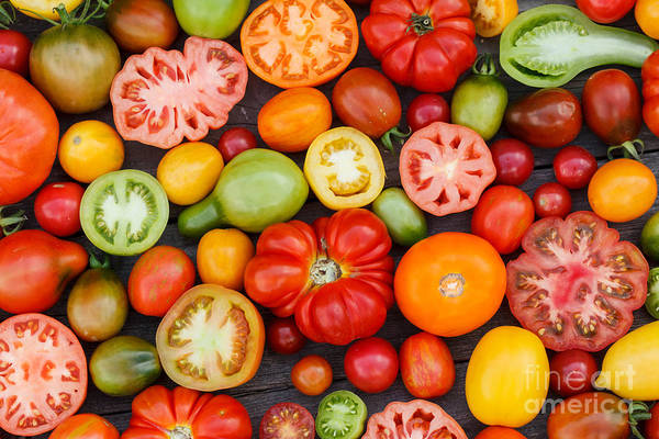 Harvest Wall Art - Photograph - Colorful Tomatoes by Shebeko