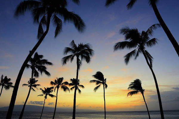 Big Island Photograph - Colorful Tropical Palm Tree Sunset Xxxl by 4fr
