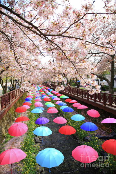 Wall Art - Photograph - Colorful Umbrellas On A Bridge In by Ken Lam