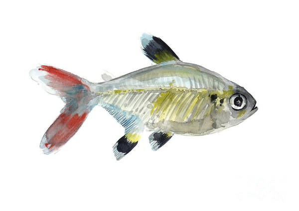 Wall Art - Painting - Colorful X-ray Tetra Fish Watercolor by Joanna Szmerdt