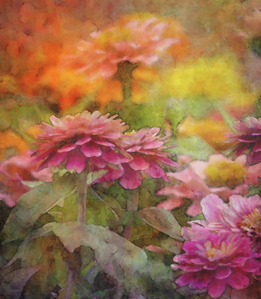 Photograph - Colorful Zinnias 1302 Idp_2 by Steven Ward