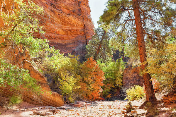 Photograph - Colorful  Zion by John M Bailey