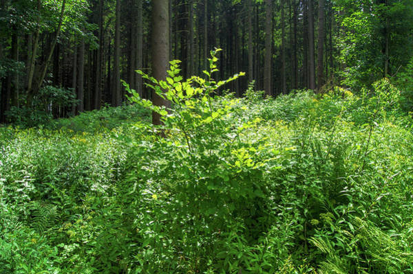 Photograph - Colors Of A Forest In Vogelsberg by Sun Travels