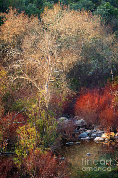Vegetal Photograph - Colors Of Andalusia by Hernan Bua
