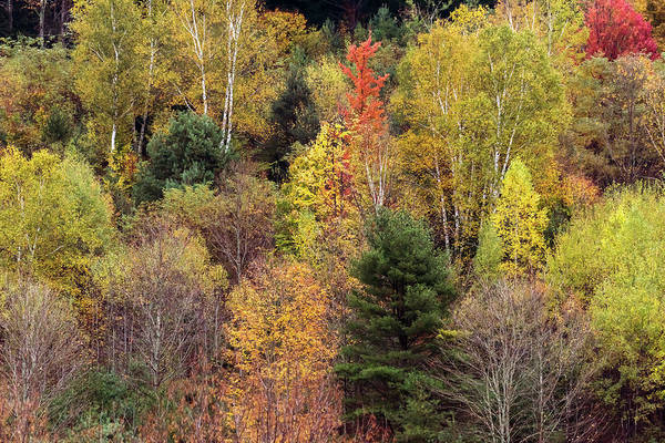 Photograph - Colors Of Autumn 1 by Terry DeLuco