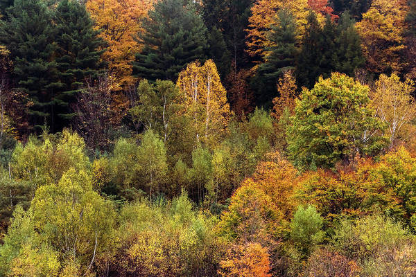 Photograph - Colors Of Autumn 2 by Terry DeLuco