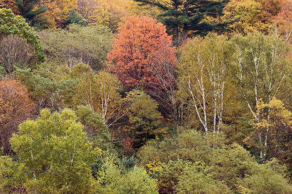Photograph - Colors Of Autumn 3 by Terry DeLuco
