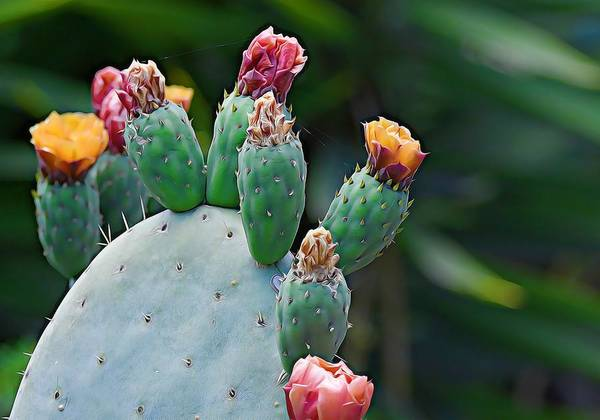 Photograph - Colors Of Cacti by Fraida Gutovich
