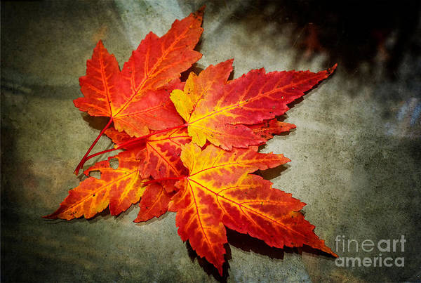Photograph - Colors Of Fall by Debra Fedchin