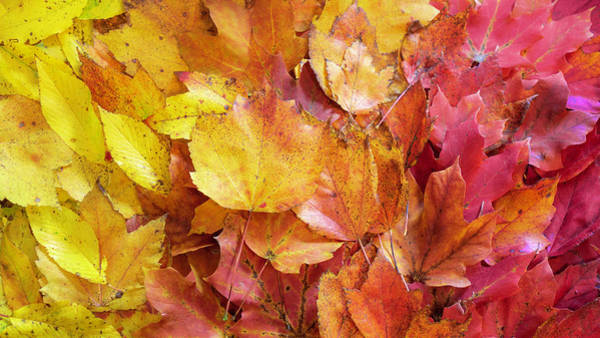Colors Of Fall - Yellow To Red Art Print
