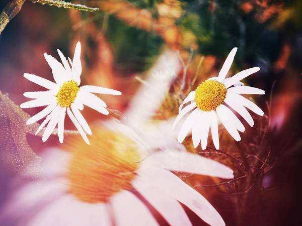 Photograph - Colors Of Garden by Jaroslav Buna