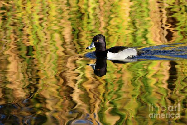 Photograph - Colors Of Nature by John F Tsumas