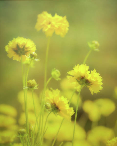 Photograph - Colors Of Summer by Allin Sorenson