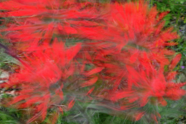 Desert Paintbrush Photograph - Colors Of The Wind by Kent Keller