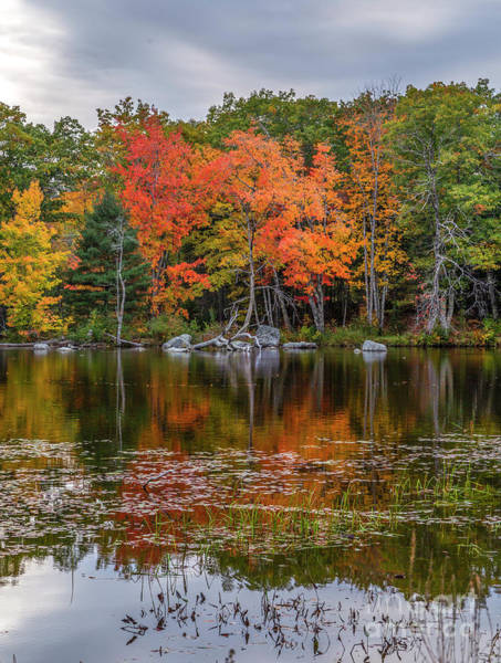 Photograph - Colors On The Pond by Karin Pinkham