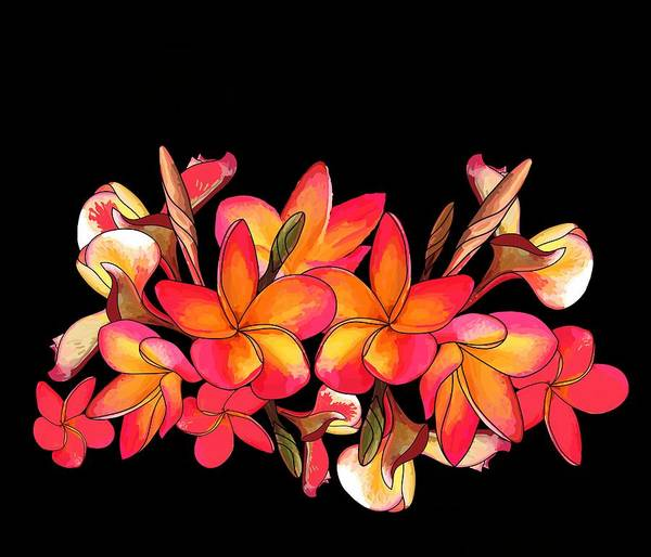 Wall Art - Drawing - Coloured Frangipani Black Bkgd by Joan Stratton