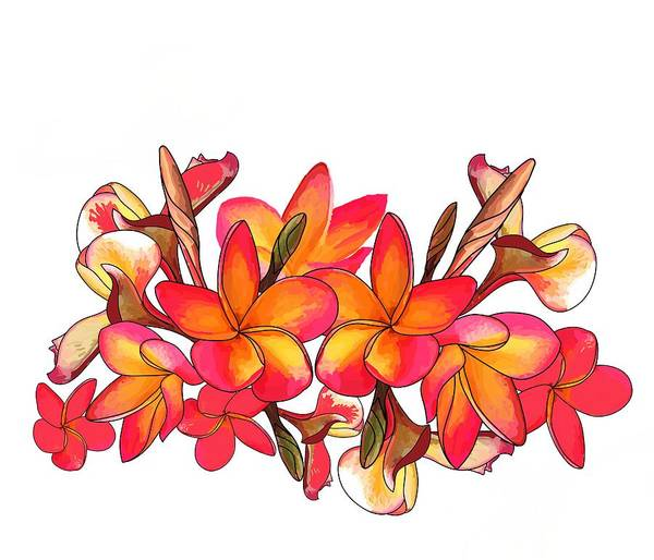 Drawing - Coloured Frangipani White Bkgd1 by Joan Stratton