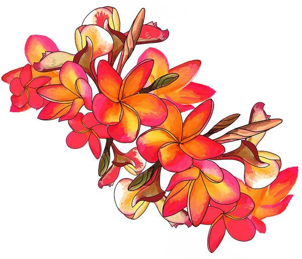 Drawing - Coloured Frangipani White Bkgd2 by Joan Stratton