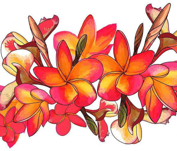 Drawing - Coloured Frangipani White Bkgd3 by Joan Stratton