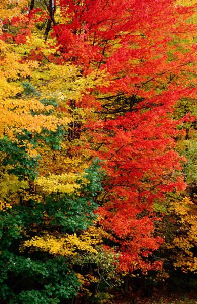 New Leaf Photograph - Colourful Autumn Foliage, United States by Izzet Keribar