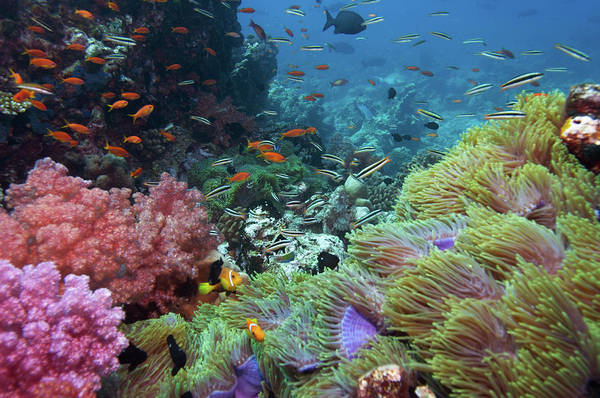 Sport Fish Photograph - Colourful Coral Reef by Amriphoto
