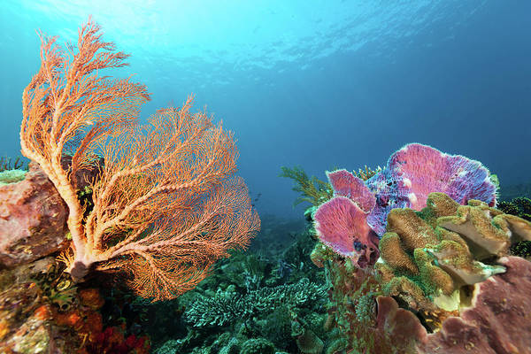 Coral Photograph - Colourful Unterwater Beauties At Pura by Ifish