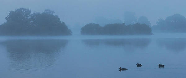 Photograph - Misty Dawn by John Dakin