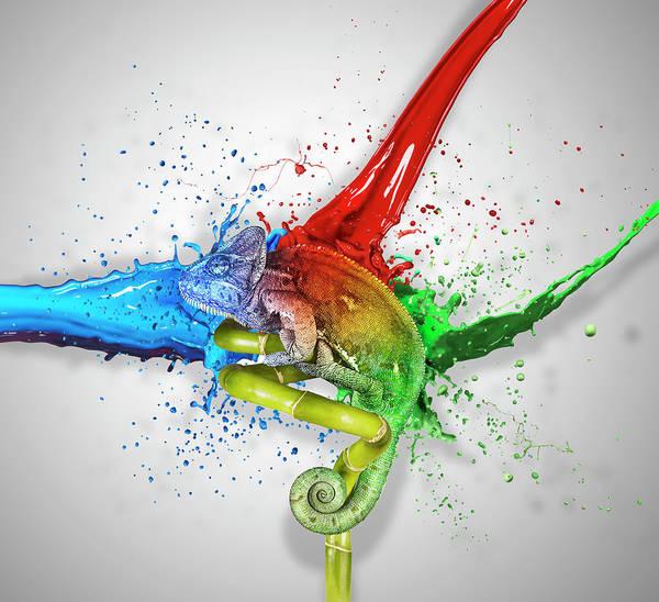 Vitality Photograph - Colours by Gandee Vasan