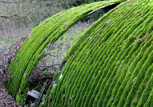 Photograph - Colours. Green by John Dakin
