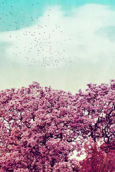 Photograph - Colours Of Spring by Dirk Wuestenhagen