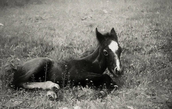 Wall Art - Painting - Colt In Black And White - Painting by Ericamaxine Price