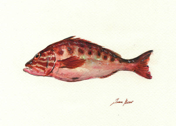 Wall Art - Painting - Comber Fish by Juan Bosco