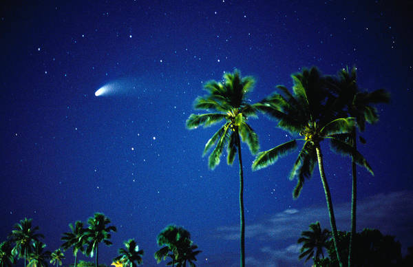 Wall Art - Photograph - Comet Hale-bopp With  Palm Trees by Karl Lehmann