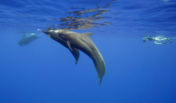 Scuba Diving Photograph - Coming Up To Breath by By Wildestanimal