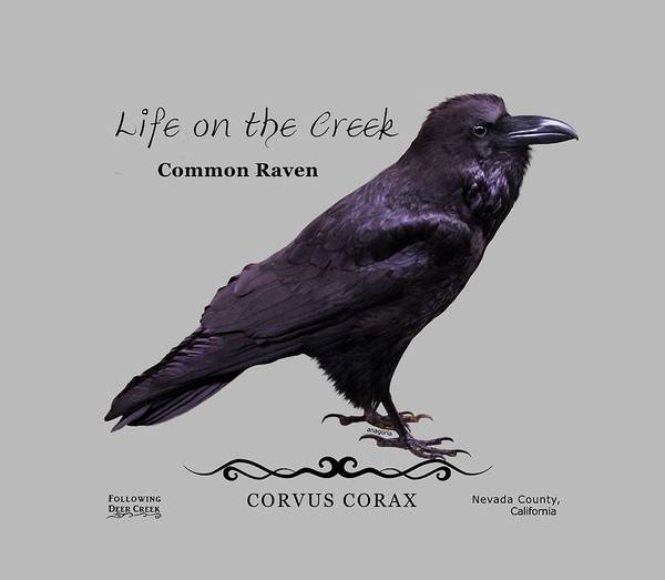 Digital Art - Common Raven by Lisa Redfern