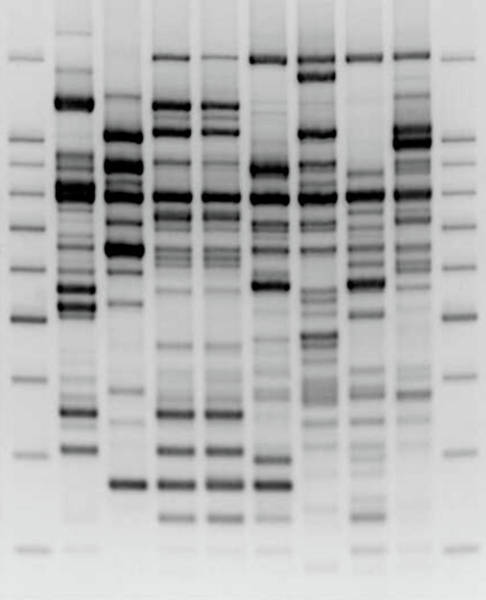 Wall Art - Photograph - Comparative Dna Analysis by Zmeel