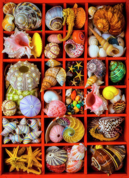 Photograph - Compartments Full Of Seashells by Garry Gay