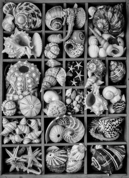 Seahorse Photograph - Compartments Full Of Seashells In Black And White by Garry Gay