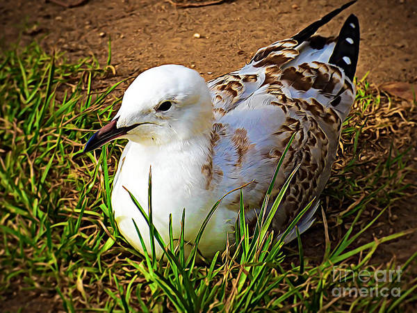Wall Art - Photograph - Composed Seagull by Trudee Hunter