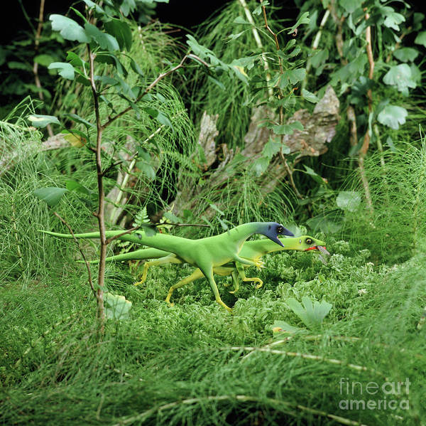 Photograph - Compsognathus Eating A Dragonfly by Warren Photographic