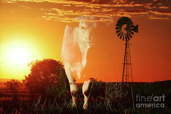 Photograph - Concept - Australian Cow Amongst The Countryside. by Rob D Imagery