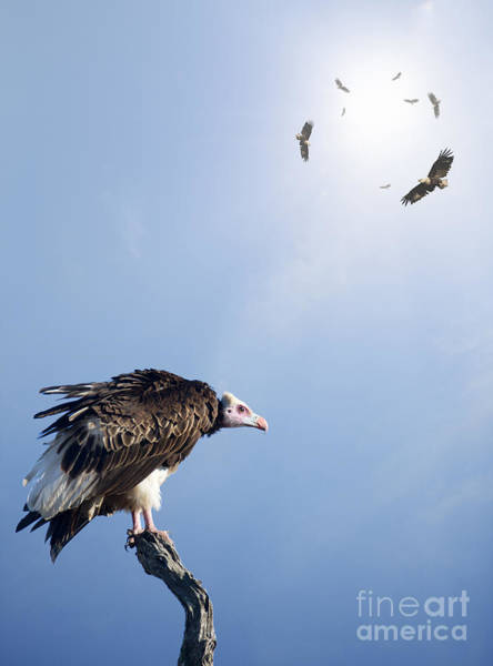 Alert Wall Art - Photograph - Conceptual - Vultures Waiting To Prey by Johan Swanepoel