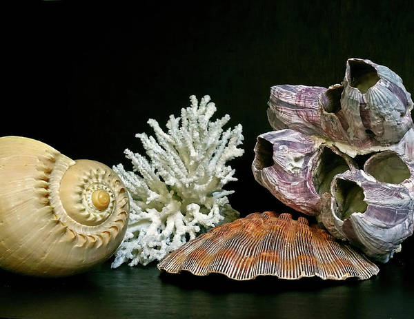 Photograph - Conch Coral Clam And Barnacle 4 by Lynda Lehmann