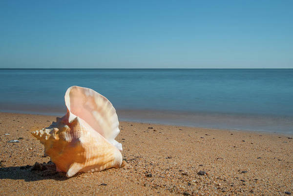 Photograph - Conch On The Beach by Mark Duehmig