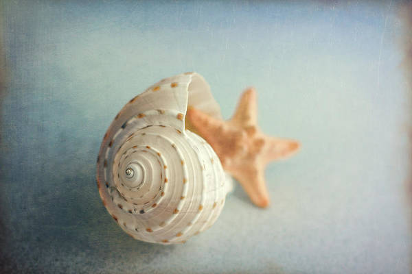 Seashell Photograph - Conch Shell And Starfish by Tom Mc Nemar
