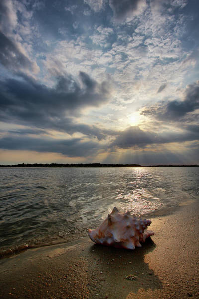 Matanzas Inlet Wall Art - Photograph - Conch Shell At Beach by Photo By Claudia Domenig