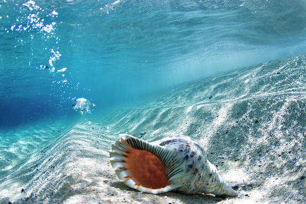 Conch Photograph - Conch Shell Bubbles by Sean Davey