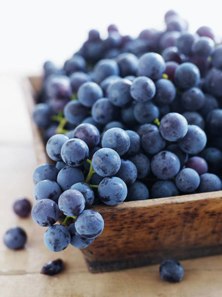 New Hampshire Photograph - Concord Grapes by Alexandra Grablewski
