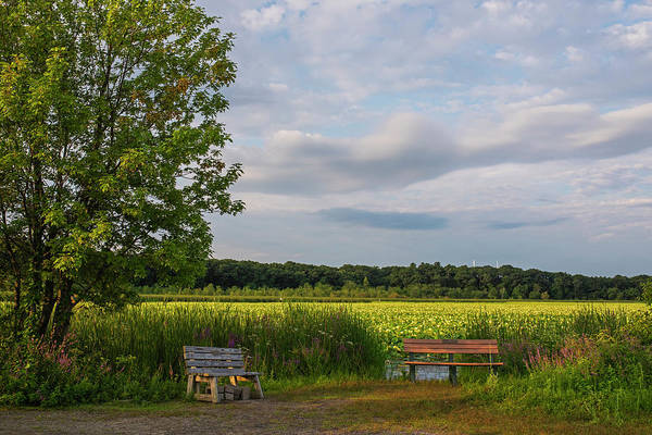 Photograph - Concord Ma Great Meadows Benches New England Lotus Bloom by Toby McGuire