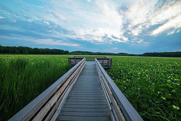 Photograph - Concord Ma Great Meadows Lookout Lotus Bloom by Toby McGuire